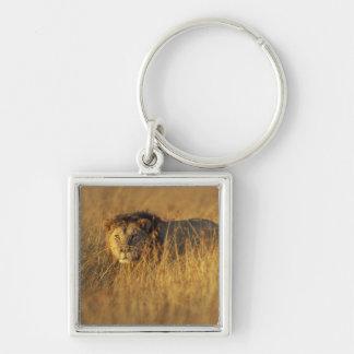 Africa, Kenya, Masai Mara Game Reserve, Adult Keychain