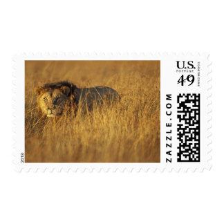 Africa, Kenya, Masai Mara Game Reserve, Adult Postage