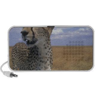 Africa, Kenya, Masai Mara Game Reserve, Adult Travelling Speaker