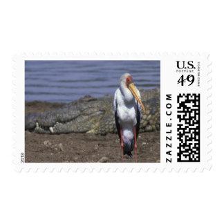 Africa Kenya Masai Mara Game Reserve African Postage Stamp