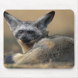 Africa, Kenya, Masai Mara Game Reserve, Bat Mouse Pad