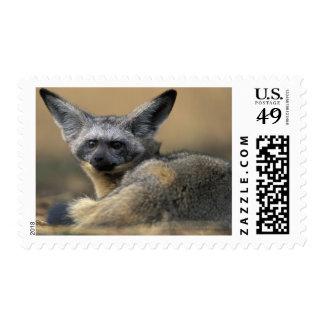 Africa Kenya Masai Mara Game Reserve Bat Stamps