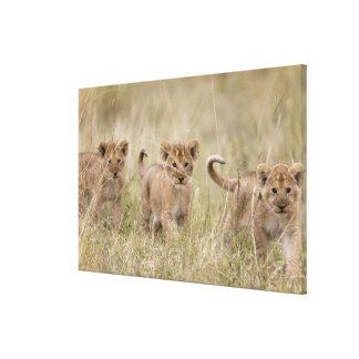 'Africa, Kenya, Masai Mara Game Reserve' Canvas Print