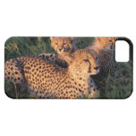 Africa, Kenya, Masai Mara Game Reserve. Cheetah 2 iPhone 5 Cases