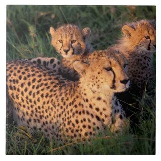 Africa, Kenya, Masai Mara Game Reserve. Cheetah 2 Ceramic Tile