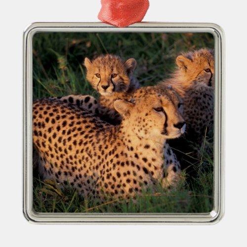 Africa Kenya Masai Mara Game Reserve Cheetah 2 Metal Ornament