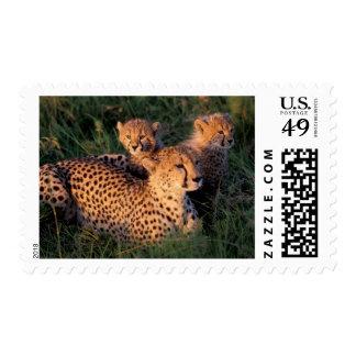 Africa Kenya Masai Mara Game Reserve Cheetah 2 Postage Stamps