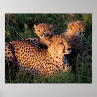 Africa, Kenya, Masai Mara Game Reserve. Cheetah 2 Poster