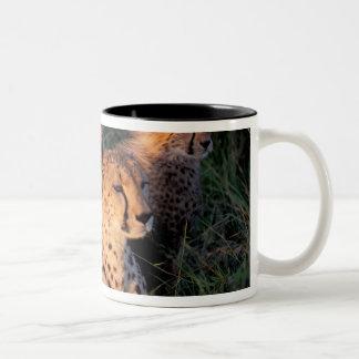 Africa, Kenya, Masai Mara Game Reserve. Cheetah 2 Two-Tone Coffee Mug