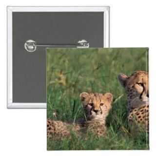 Africa, Kenya, Masai Mara Game Reserve. Cheetah Button