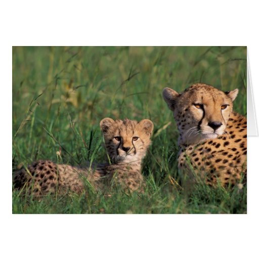 Africa, Kenya, Masai Mara Game Reserve. Cheetah Greeting Card
