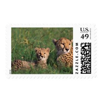 Africa Kenya Masai Mara Game Reserve Cheetah Stamp