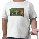 Africa, Kenya, Masai Mara Game Reserve. Cheetah Tee Shirt