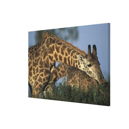 Africa Kenya Masai Mara Game Reserve Giraffes Canvas Print