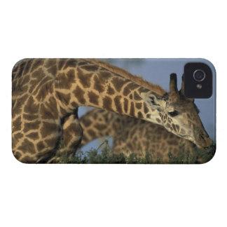 Africa, Kenya, Masai Mara Game Reserve, Giraffes iPhone 4 Cover