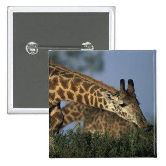 Africa, Kenya, Masai Mara Game Reserve, Giraffes Pinback Button