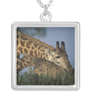 Africa, Kenya, Masai Mara Game Reserve, Giraffes Silver Plated Necklace