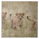 'Africa, Kenya, Masai Mara Game Reserve' Large Square Tile