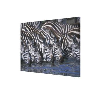 Africa, Kenya, Masai Mara Game Reserve, Plains Canvas Print