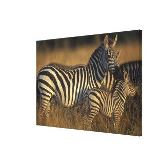 Africa, Kenya, Masai Mara Game Reserve. Plains Canvas Print
