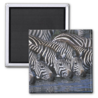 Africa, Kenya, Masai Mara Game Reserve, Plains Magnet