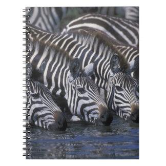 Africa, Kenya, Masai Mara Game Reserve, Plains Notebook