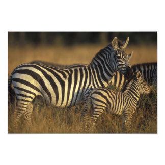 Africa, Kenya, Masai Mara Game Reserve. Plains Photo Print