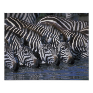 Africa, Kenya, Masai Mara Game Reserve, Plains Poster
