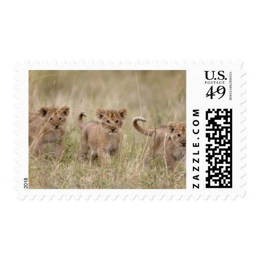 'Africa, Kenya, Masai Mara Game Reserve' Postage