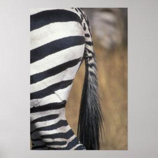 Africa, Kenya, Masai Mara Game Reserve, Poster