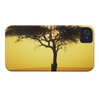 Africa, Kenya, Masai Mara Game Reserve, Rising iPhone 4 Case