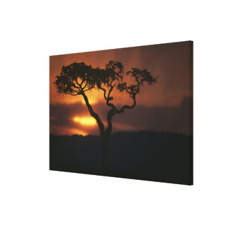 Africa, Kenya, Masai Mara Game Reserve, Setting Canvas Print
