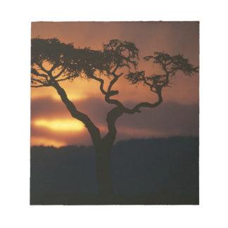 Africa, Kenya, Masai Mara Game Reserve, Setting Memo Pad