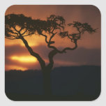 Africa, Kenya, Masai Mara Game Reserve, Setting Stickers