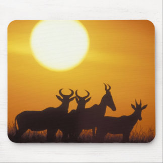 Africa, Kenya, Masai Mara Game Reserve, Topi Mouse Pad