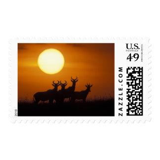 Africa Kenya Masai Mara Game Reserve Topi Postage Stamps