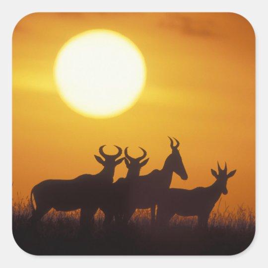 Africa, Kenya, Masai Mara Game Reserve, Topi Square Sticker