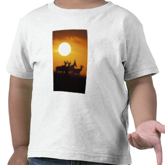 Africa, Kenya, Masai Mara Game Reserve, Topi Shirt