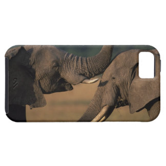 Africa, Kenya, Masai Mara Game Reserve, Two Bull iPhone SE/5/5s Case