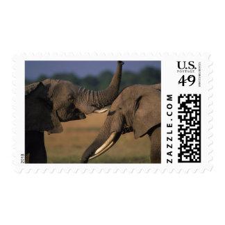 Africa Kenya Masai Mara Game Reserve Two Bull Stamps