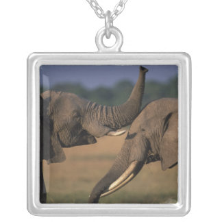 Africa, Kenya, Masai Mara Game Reserve, Two Bull Silver Plated Necklace