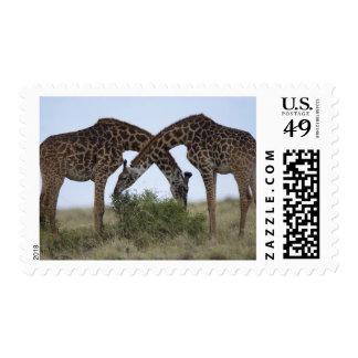 Africa, Kenya, Masai Mara Game Reserve, Two Postage