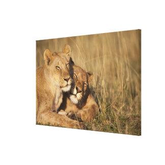 Africa, Kenya, Masai Mara Game Reserve, Young Canvas Print