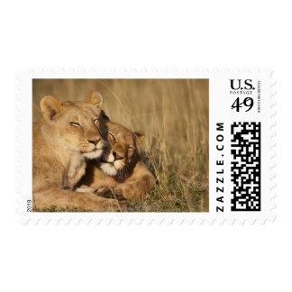 Africa Kenya Masai Mara Game Reserve Young Postage Stamp