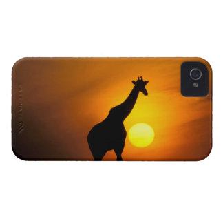 Africa Kenya Masai Mara Giraffe Giraffe Blackberry Bold Covers