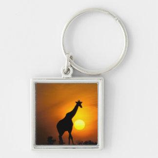 Africa, Kenya, Masai Mara. Giraffe (Giraffe Keychain