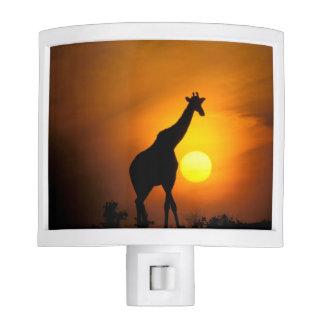 Africa, Kenya, Masai Mara. Giraffe (Giraffe Night Light