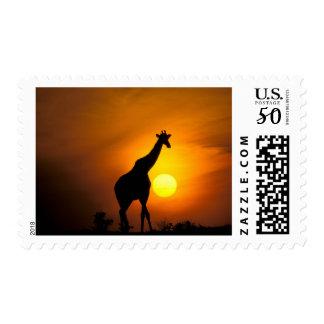 Africa, Kenya, Masai Mara. Giraffe (Giraffe Postage