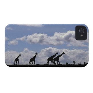 Africa Kenya Masai Mara Giraffes Giraffa Blackberry Bold Cover