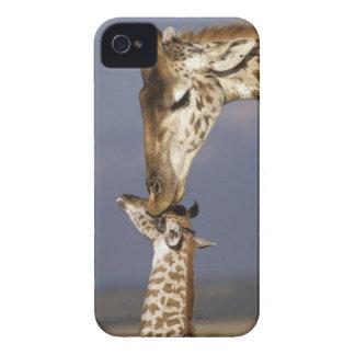 Africa Kenya Masai Mara Giraffes Giraffe Blackberry Bold Cases